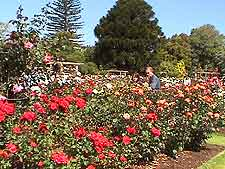 Auckland Parks and Gardens