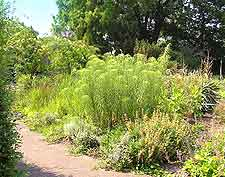 Springtime image of the Botanischer Garten Bruglingen