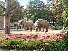 Photo of elephants at Basel's City Zoo