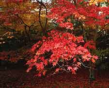 Picture of Westonbirt Arboretum in Autumn