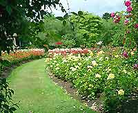Belfast Parks and Gardens