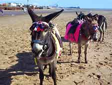 Photo showing donkey rides on the beach