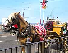 Picture of horse and carriage on the Golden Mile