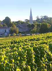 Photo of famous vineyards in Sauternes