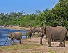 Photograph of elephants drinking at the Chobe National Park