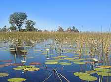 Image of the Okavango Delta
