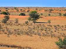 Further picture of the Kalahari Desert