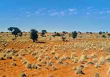 View of the famous Kalahari Desert