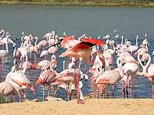 Nata Bird Sanctuary picture, showing lesser flamingos