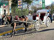 Picture of horse and carriage, awaiting passengers