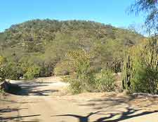 Picture of the Desert Park Natural Reserve