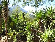 Further photo taken at the Kirstenbosch National Botanical Gardens