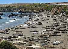 Image showing seals on nearby beach