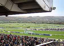 View of the horse racing at the Cheltenham Racecourse