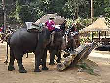 Picture of nearby elephant show