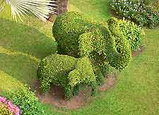 Picture of elephant topiary in Chiang Mai central garden