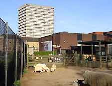 Coventry Tourist Attractions: Photo of the                       City Farm