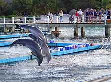 Image taken at the Dolphin Discovery