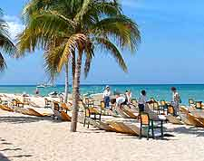 Image showing palm tree providing shade on sandy beach