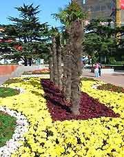 Photo showing seasonal flower display at Labour Park