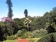 Further picture of the Durban Botanic Gardens