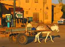 View of donkey cart in the city
