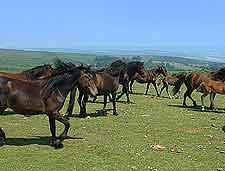 Image of Dartmoor National Park ponies
