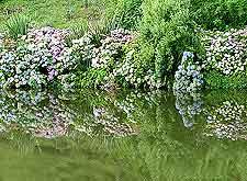 Photo of local gardens