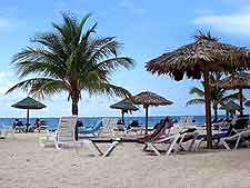 Picture of sunloungers and palm leaf parasols on beach