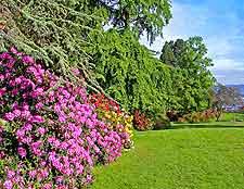 Photo of rhododendron flowers at Parc de la Grange