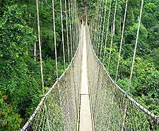 Image of aerial walkways at the Kakum National Park