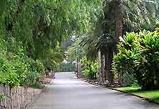 Photo showing Jardin Botanico Canario Viera y Clavijo