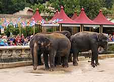 Photo of elephants at Hanover Zoo