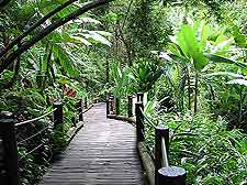 Image of the Hawaii Tropical Botanical Garden