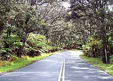 Image of road leading to the Hawaii Big Island crater rim