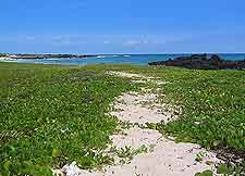 Image of trail leading to Makalawena Beach