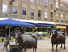 Picture of cattle statues in central St. Helier