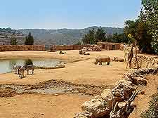 View of the Jerusalem Biblical Zoo