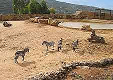 Different picture of the Jerusalem Biblical Zoo