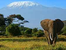 Photo showing African elephant at Amboseli Park