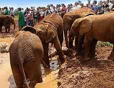 Elephant Orphanage image