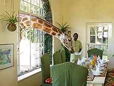 Giraffe Manor photograph