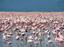 Further view of Lake Nakuru and its resident flamingos