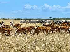 Image of the famous Maasai Mara National Reserve