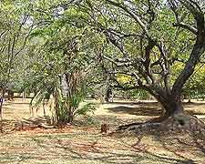 Nairobi Arboretum image