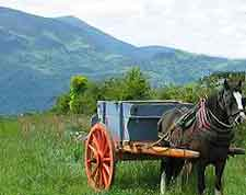 Photo of pony and trap at the Muckross Traditional Farms attraction