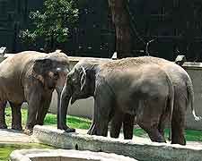 Photograph of animals found at the Alipore Zoological Gardens