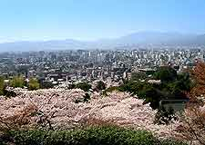 Kyoto photo showing spectacular cherry blossom in the spring