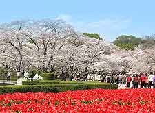 Picture of springtime flowers at the Prefectural Botanical Gardens