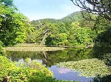 Photo of lake and lush planting at the Ryoanji Garden